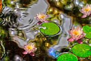 Water Plants Photos - Lily Pond by Cheryl Young