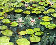 Pads Paintings - Lily Pond by Paul Walsh