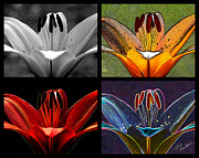 Quartet Digital Art Posters - Lily Quartet Poster by Judi Quelland