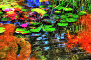 Denver Photos - Lilypad Pond by Randy Aveille