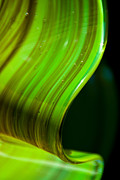 Print Glass Art Metal Prints - Lime Curl Metal Print by Dana Kern