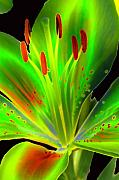 Lime Twist Print by Diane E Berry