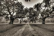 Live Oaks Framed Prints - Limerick Plantation Live Oaks Framed Print by Dustin K Ryan