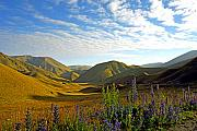 Lupins Prints - Lindis Pass Print by Kevin Smith