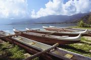Ashore Framed Prints - Line Of Outrigger Canoes Framed Print by Joss - Printscapes