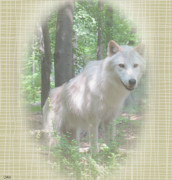 Out Of The Woods Prints - Linen Wolf Pose Print by Debra     Vatalaro