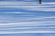 Andrea Kollo - Lines in the Snow