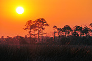 Florida Trees Posters - Lingering Golden Sunlight Poster by Jan Amiss Photography