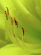 Abstract Floral Art Photos - Lining Up for Love by Juergen Roth
