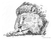 Kittin Framed Prints - Lion-Art-Black-White Framed Print by Gordon Punt