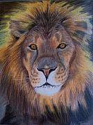 King Pastels Originals - Lion by Ashlee Terras