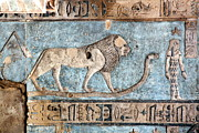 Dendera Prints - Lion At Dendera, Egypt Print by Joe & Clair Carnegie / Libyan Soup