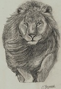 Safari Sketch Posters - Lion Poster by Christy Brammer
