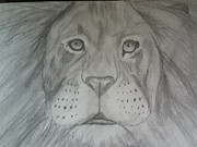 Shelby Rawlusyk - Lion Drawing