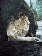 Cavern Drawings - Lion by Fabio Turini