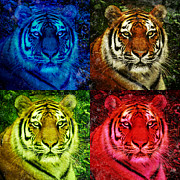 Lion Face Colored Squares Print by Angela Waye