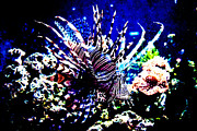 Boxed Prints - Lion fish at Oklahoma Aquarium 2005 Print by Toni Hopper
