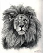 Serengeti Drawings Prints - Lion Print by Kristen Fogarty