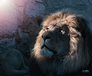 Lions Art - Lion Light by Bill Stephens