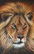Big Cat Pastels Posters - Lion Poster by Paul Dene Marlor