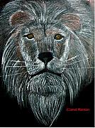 Charcoals Drawings Framed Prints - Lion Portrait Framed Print by Janet Marston