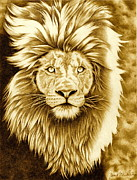 Lion Drawings Framed Prints - Lion Pride Framed Print by Jamie Warkentin