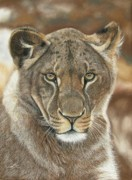 Jaguar Pastels Posters - Lion Queen Poster by Sabine Lackner