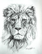 Lion  Print by Thomas Hoyle