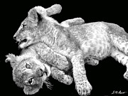 Photography Originals - Lion Wrestling BW by Michael Durst