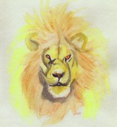 First Star Framed Prints - Lion yellow Framed Print by First Star Art 