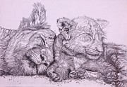 Sisters Drawings Originals - Lioness and Cub by Cecilia Putter