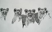 Lioness Drawings Posters - Lionesses  Poster by Ryan Seate