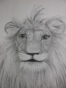 Lion Drawings Originals - Lions Face by Carol Frances Arthur