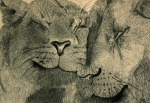 Animals Drawings - Lions in Love by Ramneek Narang