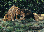 Cuddle Paintings - Lions by Kayla Ascencio
