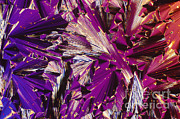 Crystalline Art - Liquid Crystalline Dna by Michael W. Davidson