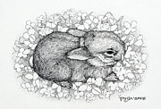 Bunny Drawings Prints - Little Big Ears Print by Tanja Ware