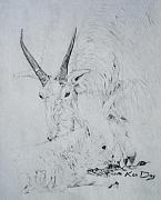 Goat Drawings - Little Billy by Ken Day
