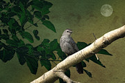 Bird In Tree Posters - Little Bird Poster by Thomas York