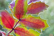 Grape Leaf Prints - Little Bit Of Autumn Print by Heidi Smith