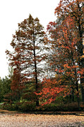 Colors Of Autumn Prints - Little Bit of Red Print by John Rizzuto