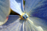 Kay Lovingood Art - Little Blue Flower by Kay Lovingood