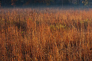 Prairie Photo Posters - Little Bluestem Grasses On The Prairie Poster by Steve Gadomski