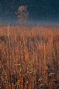 Illinois Nature Acrylic Prints - Little Bluestem Prairie Grass Acrylic Print by Steve Gadomski