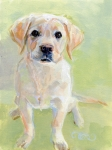 Golden Lab Paintings - Little Boy by Kimberly Santini