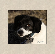 Jack Russell Digital Art - Little Buddy by Tommy Anderson
