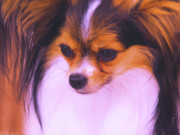 Papillon Dog Paintings - Little Butterfly by Jai Johnson