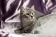 Little Cat On Lilac Print by Raffaella Lunelli