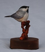 Birds Sculpture Acrylic Prints - Little Chickadee Acrylic Print by Betsy Popp