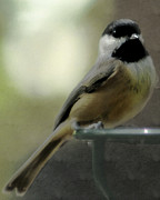 Wendy Riley- Athans - Little chickadee